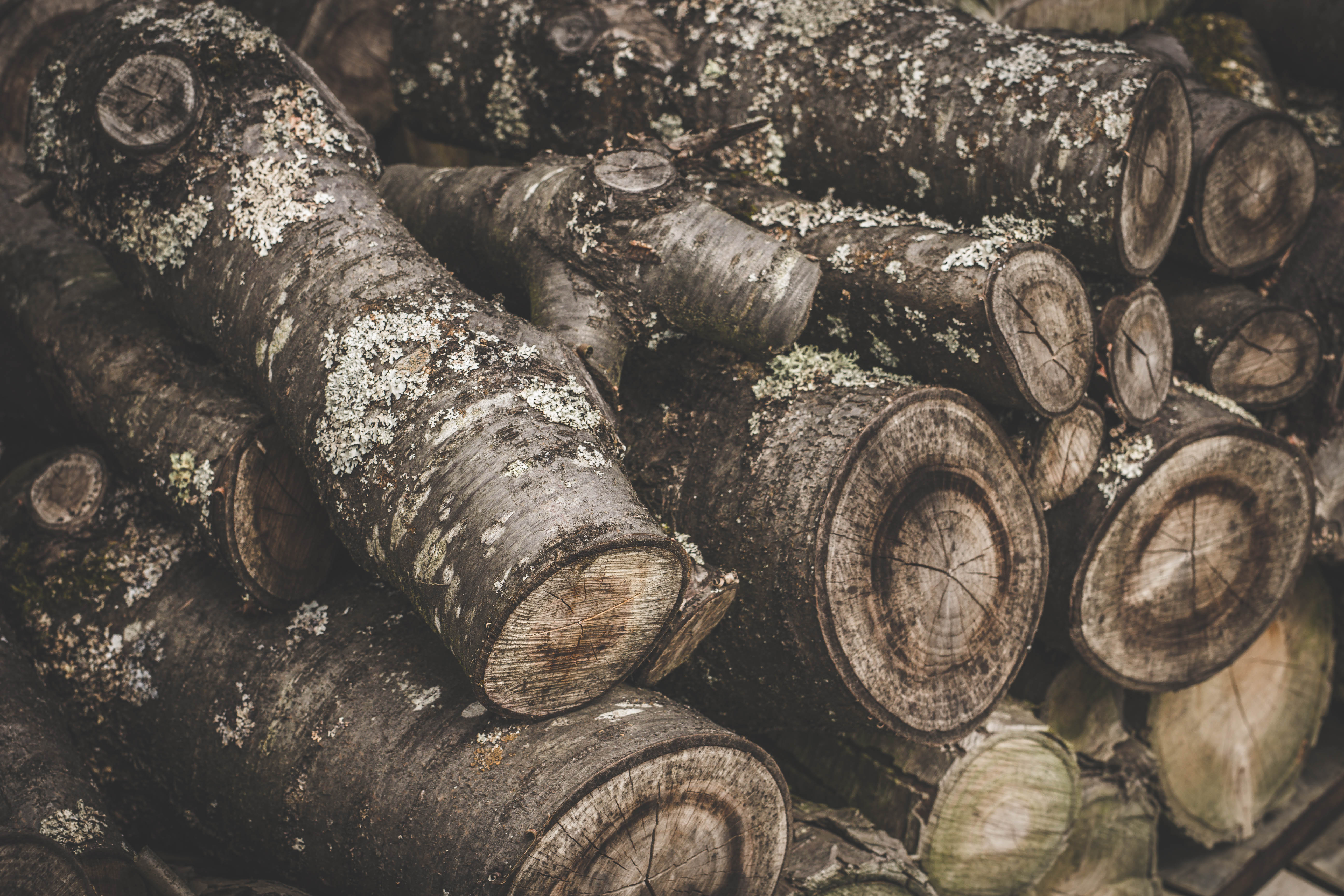 tree-service-colleyville-log-woods
