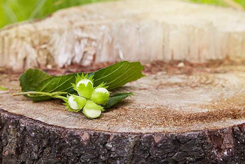 tree-service-colleyville-stump-flower